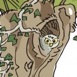 Des illustrations pour une nature plus diversifiée